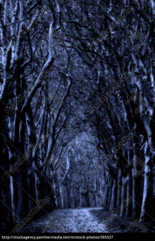 viale, mistico - 395537