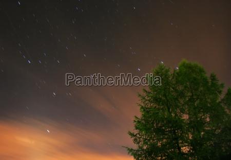 arte esperimento albero universo notte fuoco