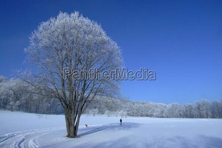 blu albero alberi inverno freddo solitario