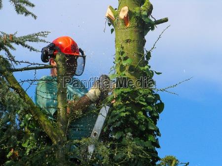 albero rami cadere casco abbattere boscaiolo