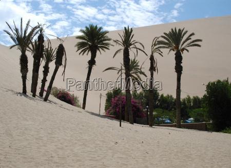 blu enorme deserto turismo fiore fiori