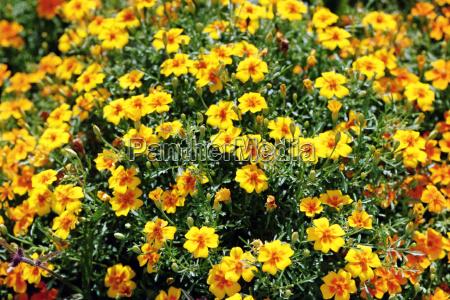 mare fiori sullisola di mainau