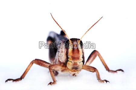 alte le antenne