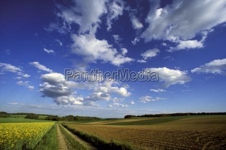orizzonte colza agricoltura campo austria primavera