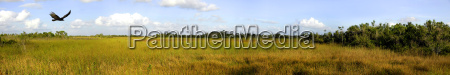 blu verde parco nazionale animali palude