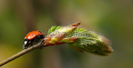 primo piano close up insetto verde