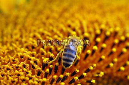 pollen noise
