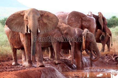 parco nazionale africa kenia animali mammiferi