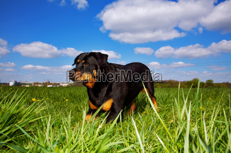 playing in the tall grass