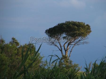 albero alberi riva del mare spiaggia
