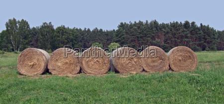 aspettare attesa agricolo agricoltura campo estate