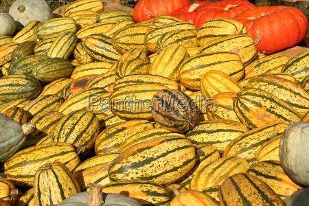 frutta halloween zucche bacche zucca arancione
