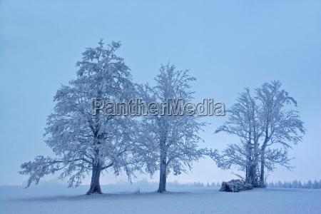 luce albero alberi inverno freddo nebbia