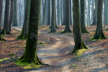 albero alberi tronco muschio mistico modi