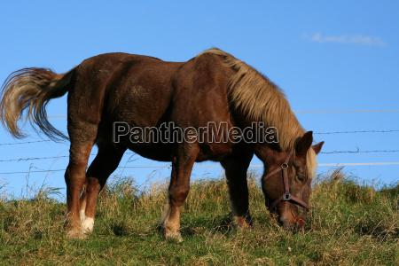 cavallo agricoltura animali a sangue freddo