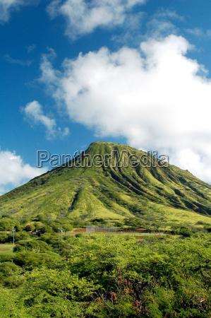 vegetazione piante paesaggio natura piantato montagna