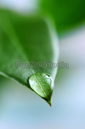 goccia dellacqua sul foglio verde