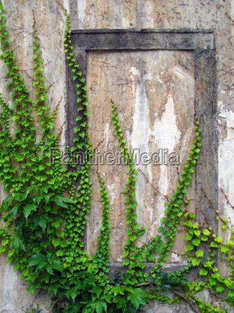 muro fotogramma incorniciare vecchio terrapieno edera