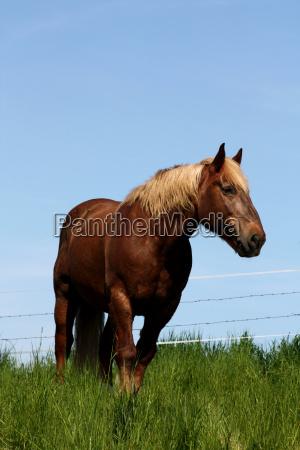 cavallo agricoltura vita di campagna animali