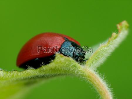 insetto scarafaggio