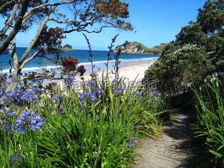fioritura riva del mare spiaggia nuova