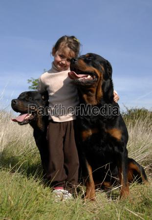 piccolo poco breve cane cani rottweiler