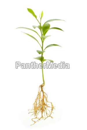 verde radice crescere giovani pianta natura