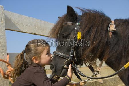 amicizia cavallo piccolo poco breve pony