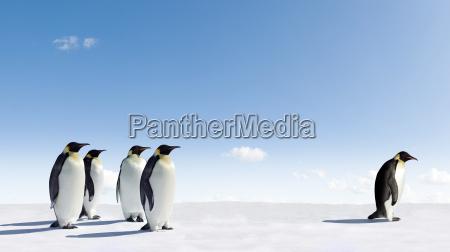 pinguini dellimperatore