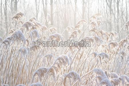 inverno freddo cocaina farmaco erbe gelo