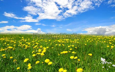nubi paesaggio prato
