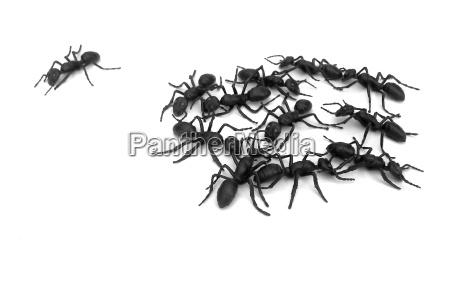 formica nero azienda gruppo societa sociale