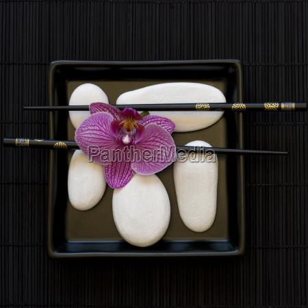 orchidea e ghiaia bianca