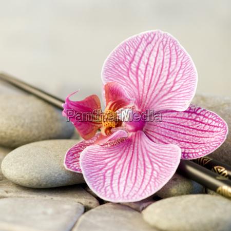 orchidea fiore natura morta