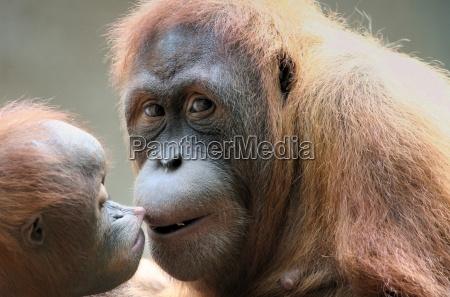 scimmia amore materno cucciolo bambino
