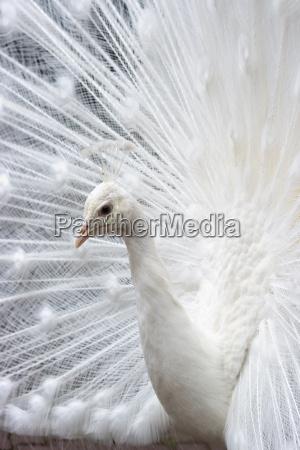 animale uccello animali uccelli penne piume