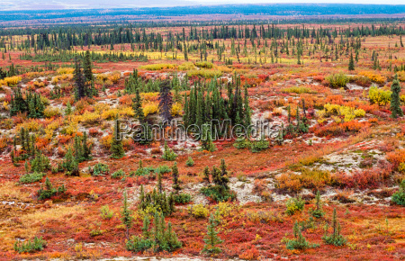 paesaggio tundra a colori dautunno