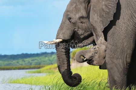 famiglia elefante 01jpg