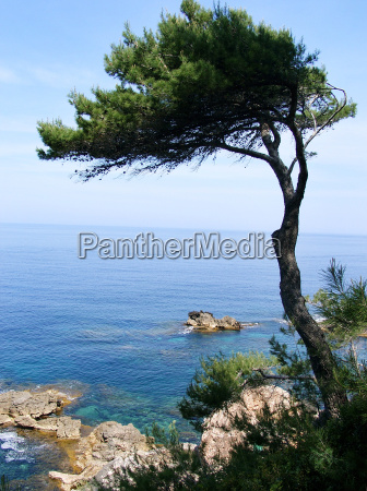 pino sul mar mediterraneo