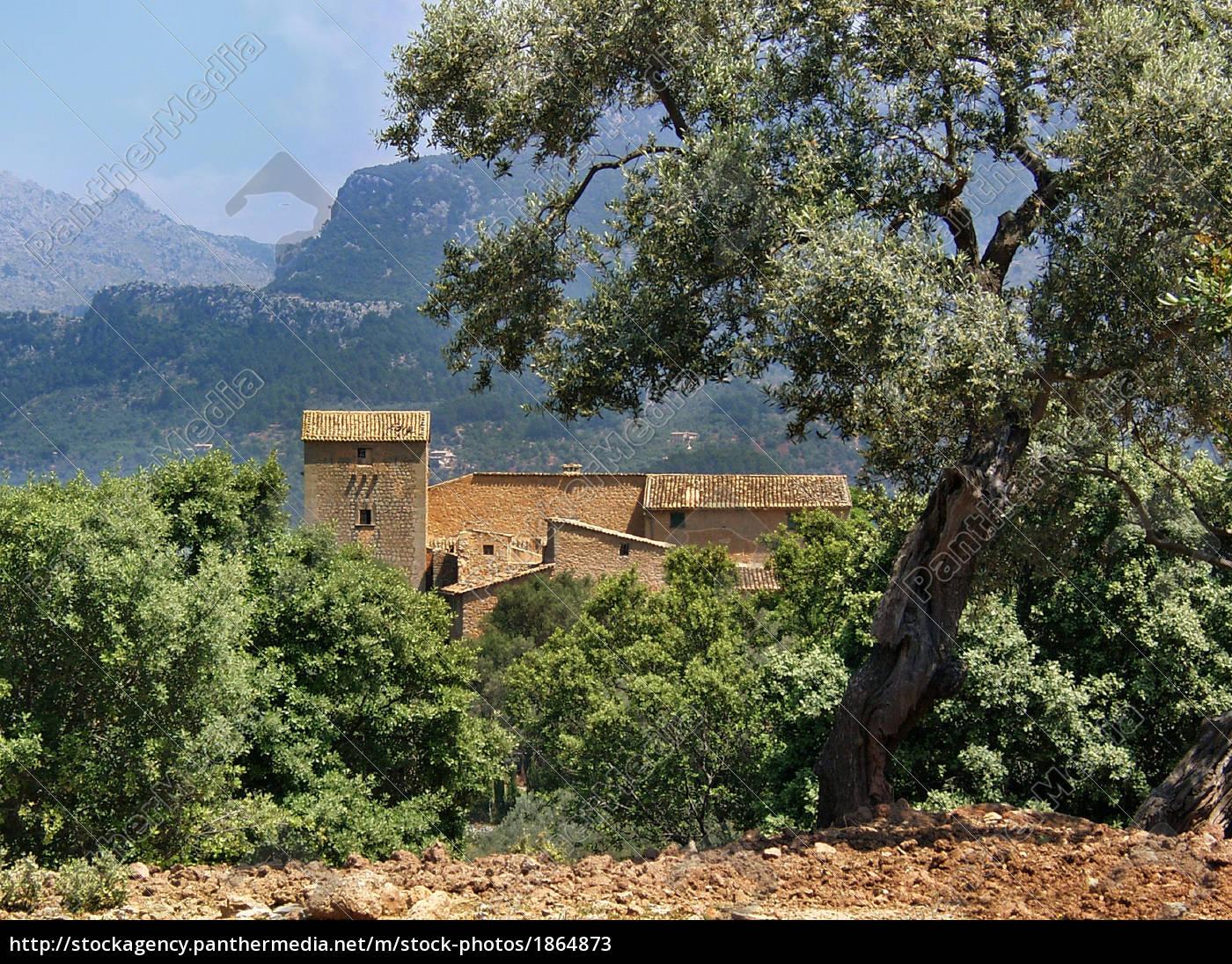 finca, in, olivenhain, , mallorca - 1864873