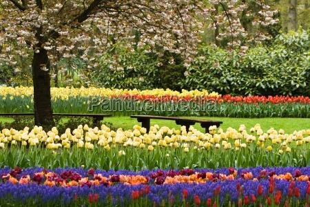 giardino fiore fiori tulipani primavera impianto