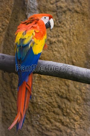 uccello uccelli penne piume natura tropicale