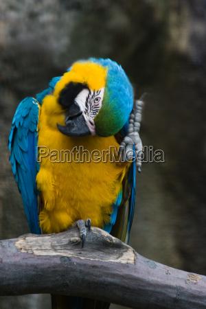 animale uccello animali uccelli pappagalli tropicale