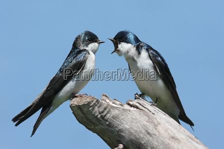 uccello selvaggio uccelli natura urlare strillare