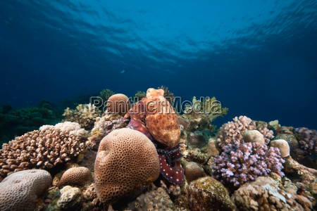 oceano sole e polpo