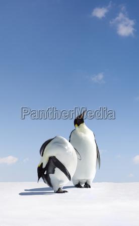 progettazione concetto modello progetto bozza uccello