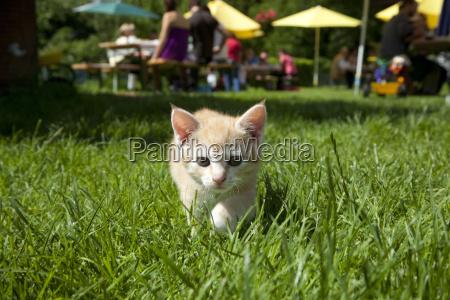 animali animali domestici giovani gatto gatta