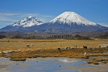cile vulcano parinacota lauca