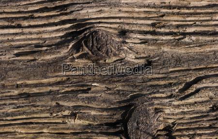 legno marrone farmaco astratto abbronzatura struttura