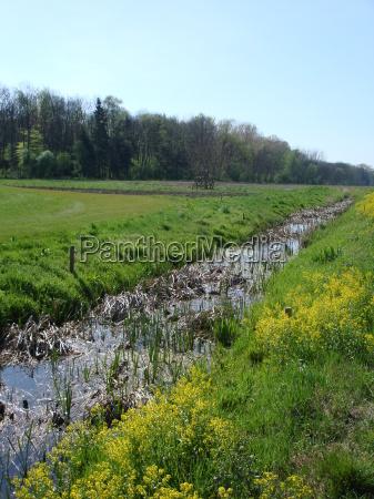 colza primavera golfo foresta fiume acqua